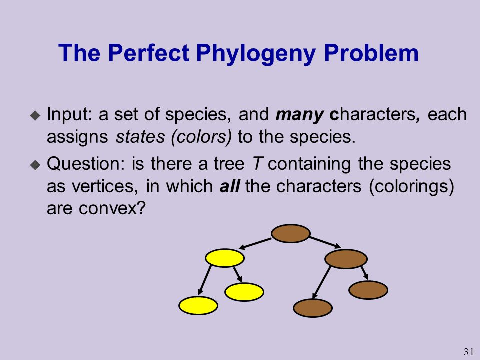 31 The Perfect Phylogeny Problem u Input: a set of species, and many characters, each assigns states (colors) to the species.