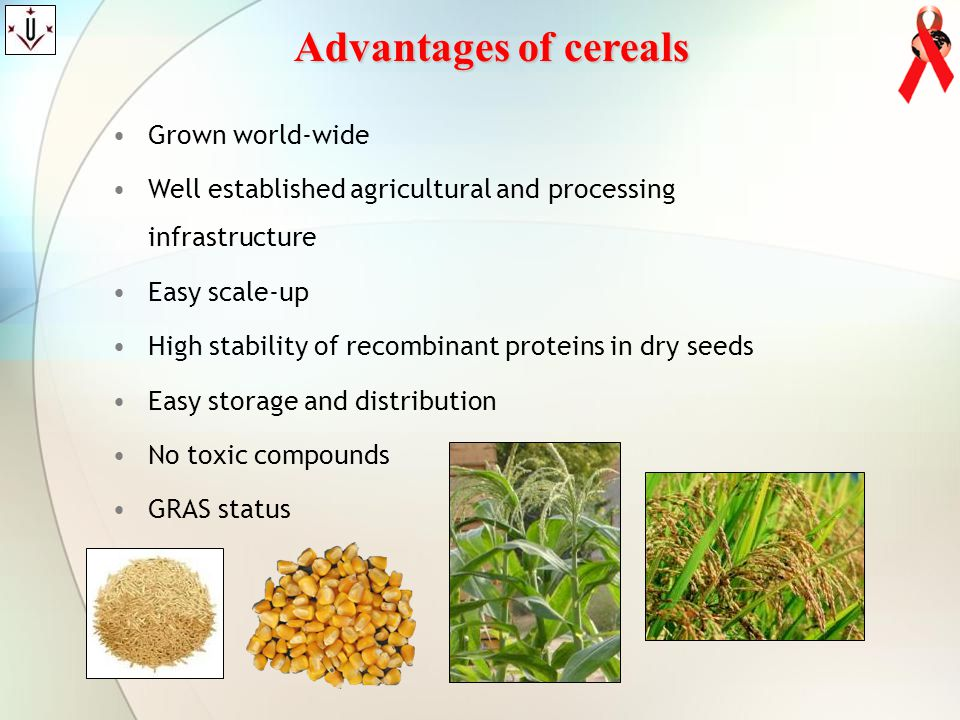 Advantages of cereals Grown world-wide Well established agricultural and processing infrastructure Easy scale-up High stability of recombinant protein
