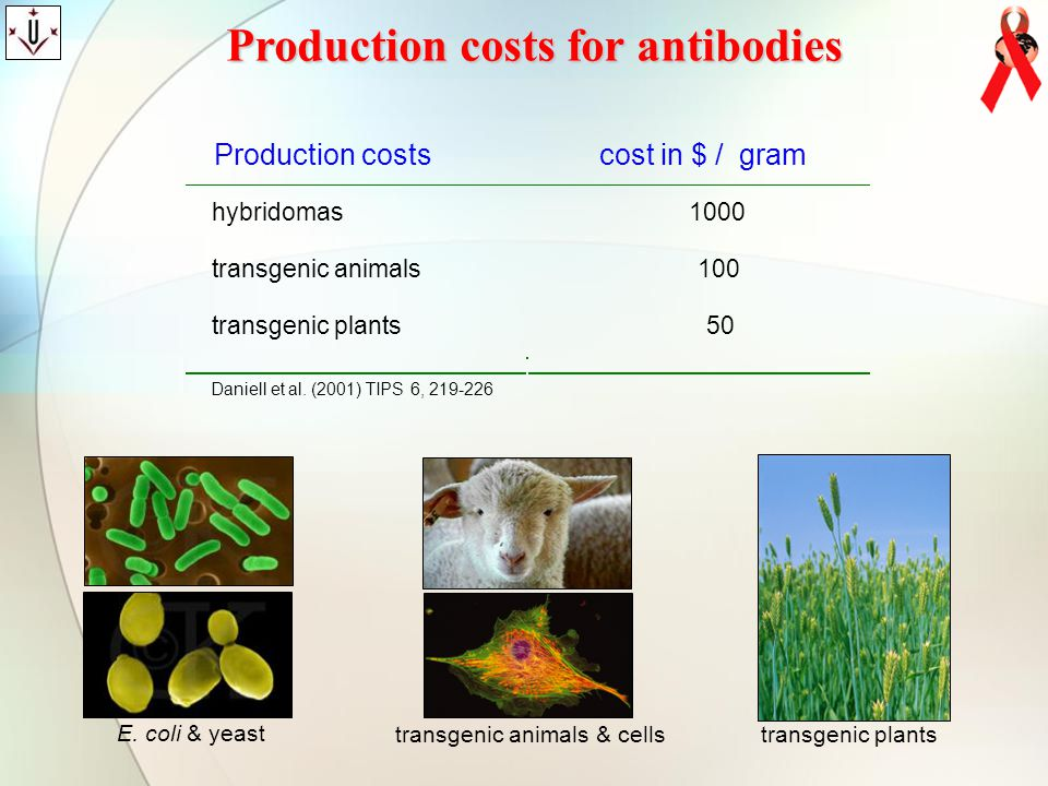 Production costs for antibodies Production costscost in $ /gram hybridomas1000 transgenic animals100 transgenic plants50 Daniell et al. (2001) TIPS 6,