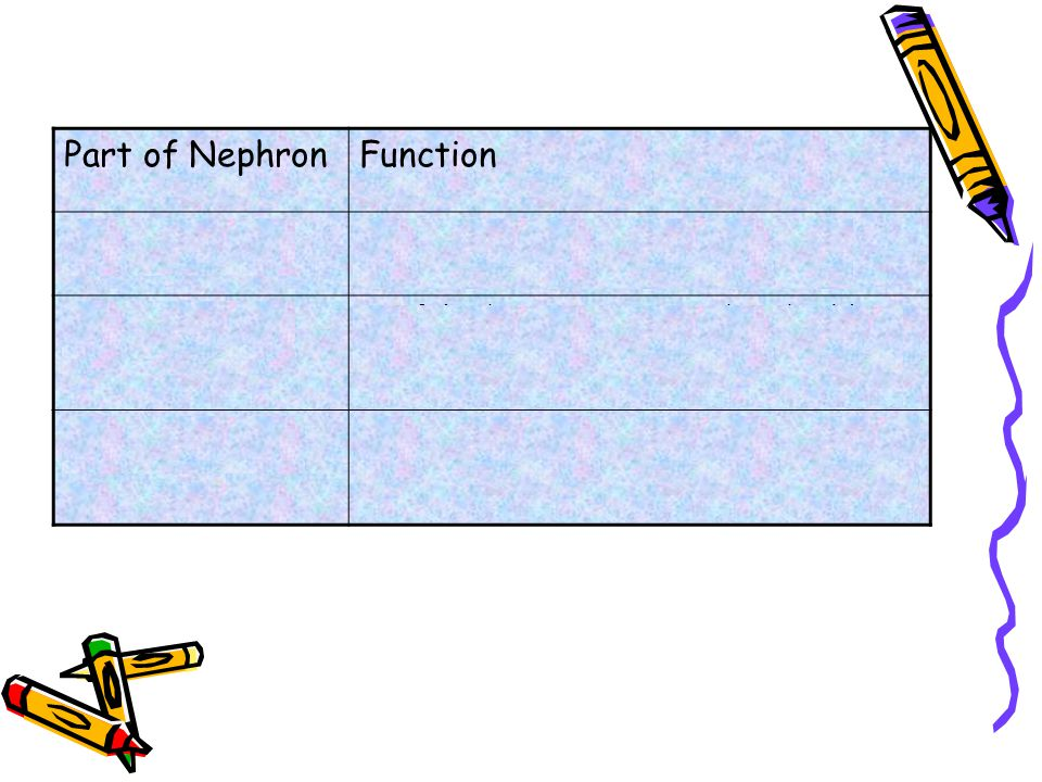 Part of NephronFunction Glomerulus Blood is filtered and collects in the Bowman's Capsule Kidney Tubule Useful substances are re-absorbed (eg, glucose