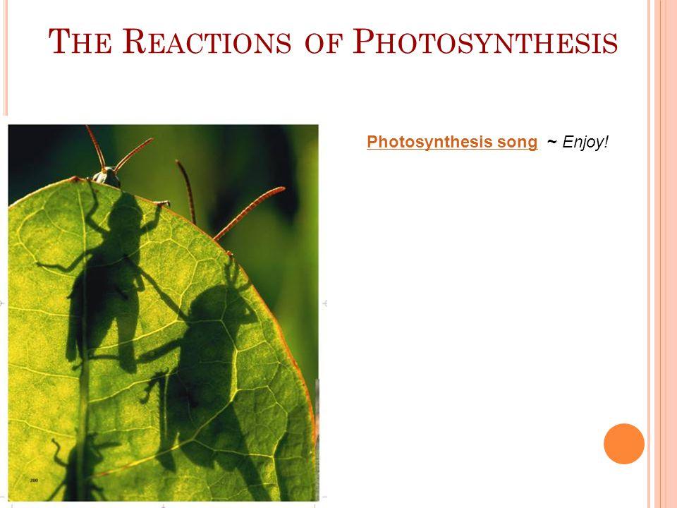 I NSIDE A C HLOROPLAST Inside a Chloroplast In plants, photosynthesis takes place inside chloroplasts.