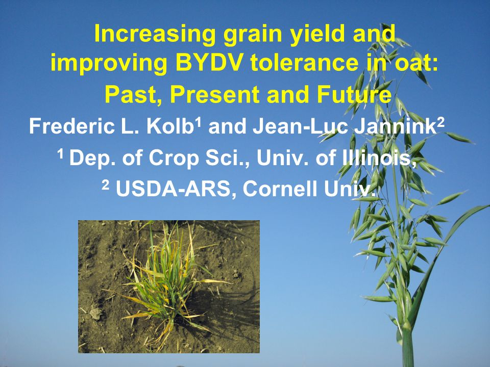 Increasing grain yield and improving BYDV tolerance in oat: Past, Present and Future Frederic L. Kolb 1 and Jean-Luc Jannink 2 1 Dep. of Crop Sci., Un