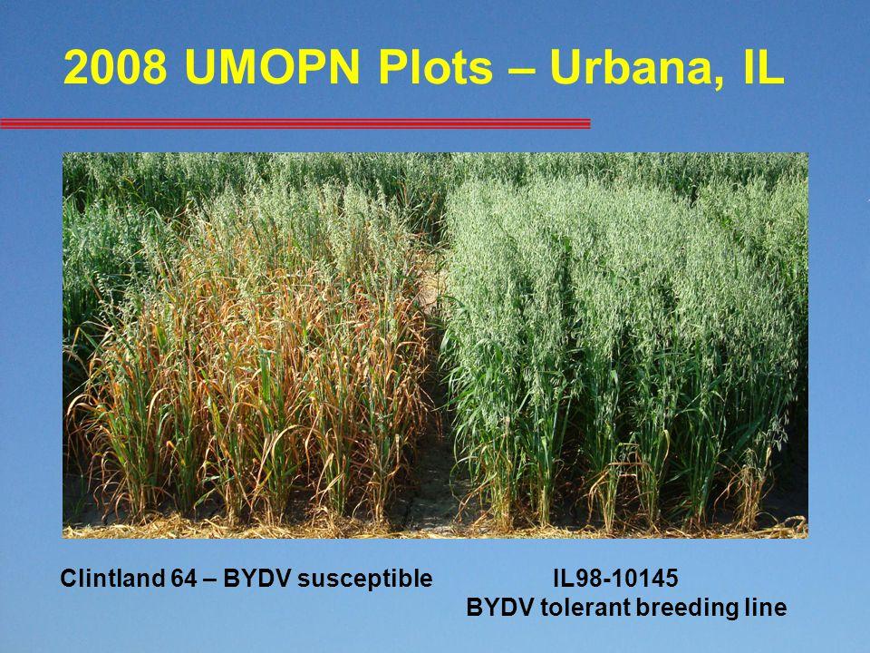2008 UMOPN Plots – Urbana, IL Clintland 64 – BYDV susceptibleIL98-10145 BYDV tolerant breeding line