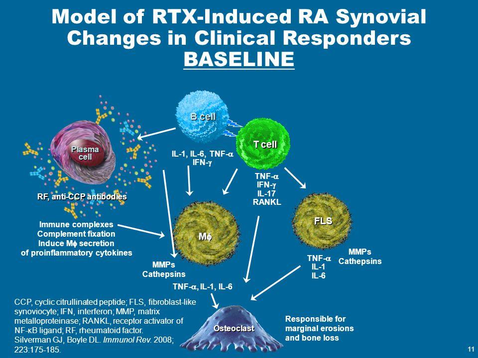 11 Responsible for marginal erosions and bone loss Osteoclast TNF- , IL-1, IL-6 IL-1, IL-6, TNF-  IFN-  T cell Plasma cell MM MM Immune complex
