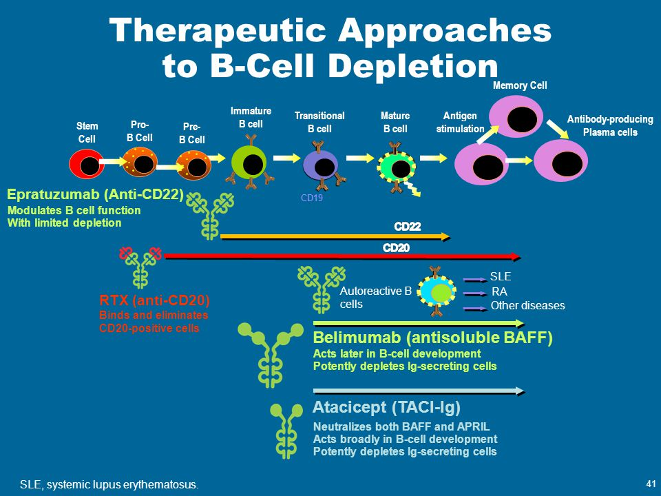 41 Therapeutic Approaches to B-Cell Depletion Belimumab (antisoluble BAFF) Autoreactive B cells SLE RA Other diseases Atacicept (TACI-Ig) RTX (anti-CD