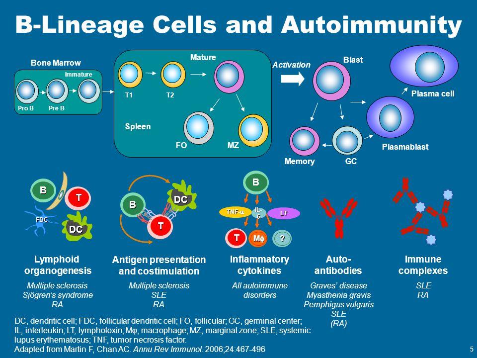 B-Lineage Cells and Autoimmunity DC, dendritic cell; FDC, follicular dendritic cell; FO, follicular; GC, germinal center; IL, interleukin; LT, lymphot