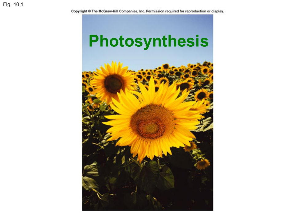 Fig. 10.1 Photosynthesis