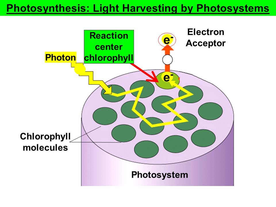 Fig. 10.10 (TEArt) Electron Acceptor Photon Chlorophyll molecules Photosystem e-e- Copyright © The McGraw-Hill Companies, Inc. Permission required for
