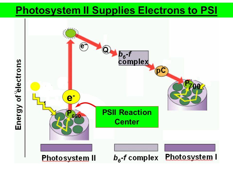 e-e- PSII Reaction Center Photosystem II Supplies Electrons to PSI