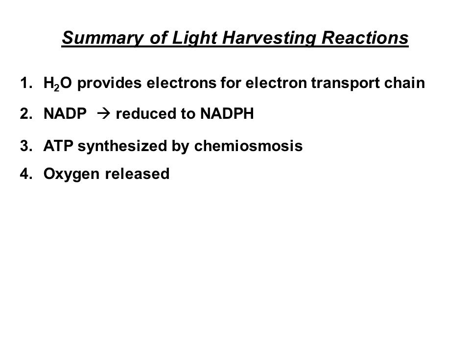 Summary of Light Harvesting Reactions 1.H 2 O provides electrons for electron transport chain 2.NADP  reduced to NADPH 3.ATP synthesized by chemiosmo