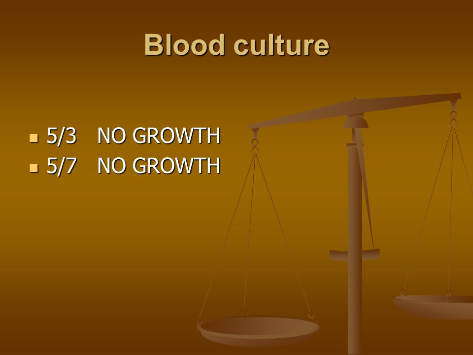 Blood culture 5/3 NO GROWTH 5/3 NO GROWTH 5/7 NO GROWTH 5/7 NO GROWTH