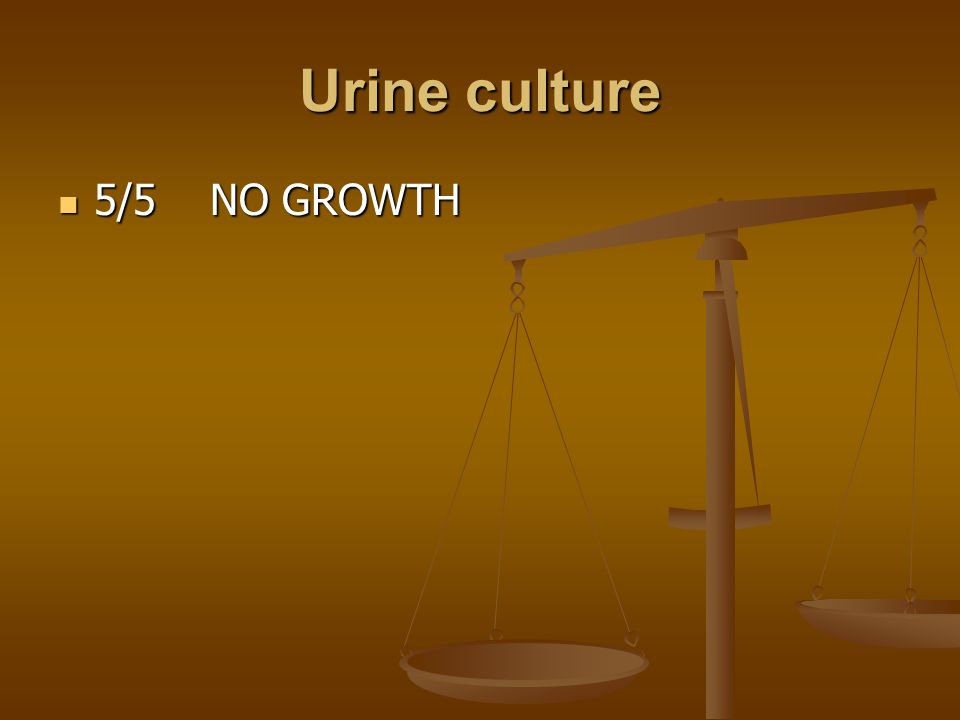 Urine culture 5/5 NO GROWTH 5/5 NO GROWTH