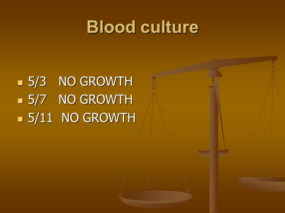 Blood culture 5/3 NO GROWTH 5/3 NO GROWTH 5/7 NO GROWTH 5/7 NO GROWTH 5/11 NO GROWTH 5/11 NO GROWTH