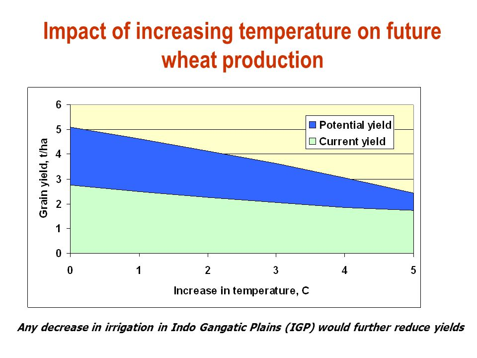 Impact of increasing temperature on future wheat production Any decrease in irrigation in Indo Gangatic Plains (IGP) would further reduce yields
