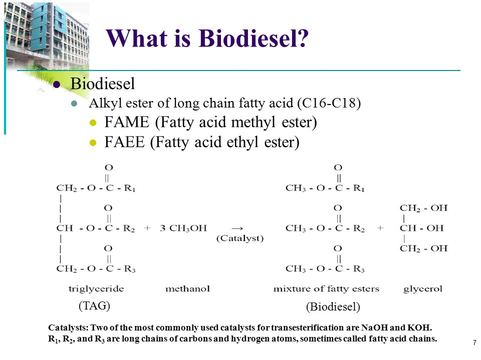 18 Lipid Biosynthesis [Source: Nelson and Cox 2005, Lehninger Principles of Biochemistry, 4th ed.] DAGAT Diacylglycerol