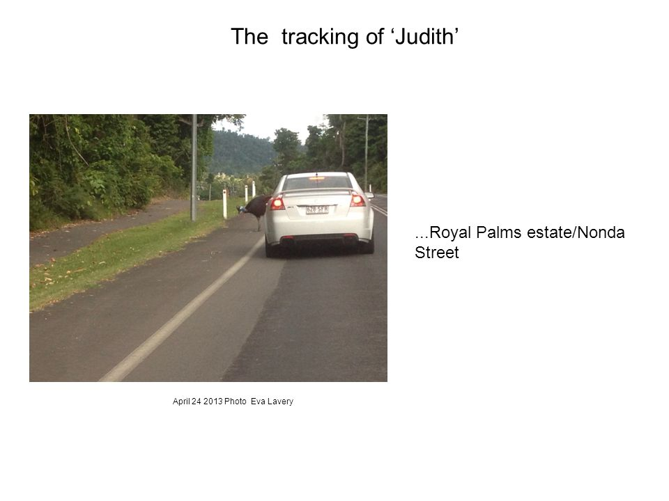 ...Royal Palms estate/Nonda Street The tracking of 'Judith' April 24 2013 Photo Eva Lavery