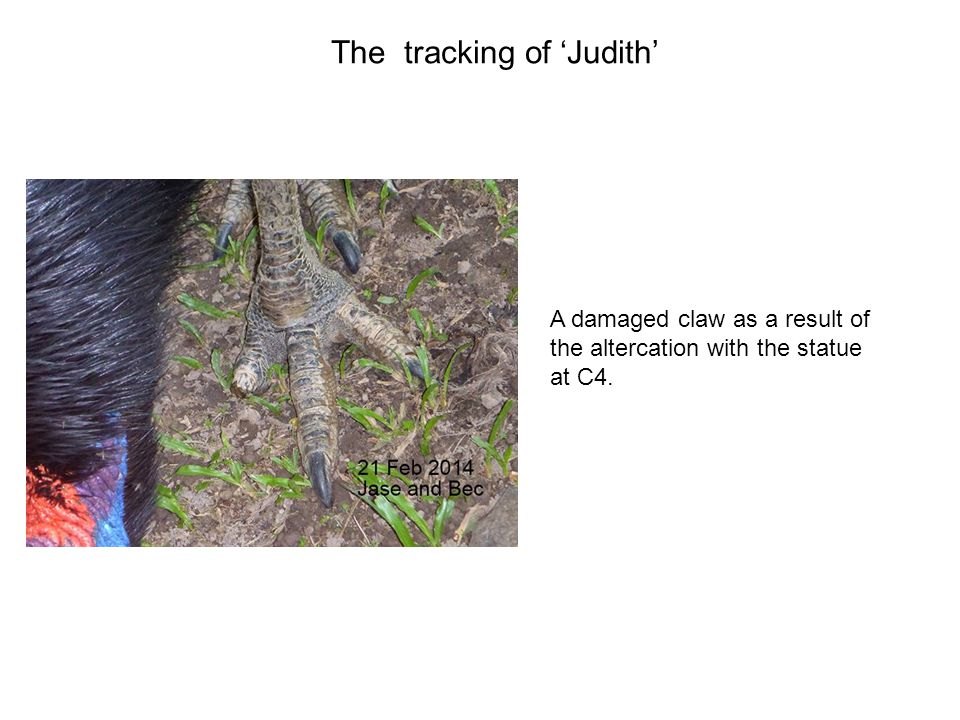 A damaged claw as a result of the altercation with the statue at C4. The tracking of 'Judith'