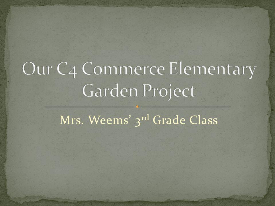 Mrs. Weems' 3 rd Grade Class