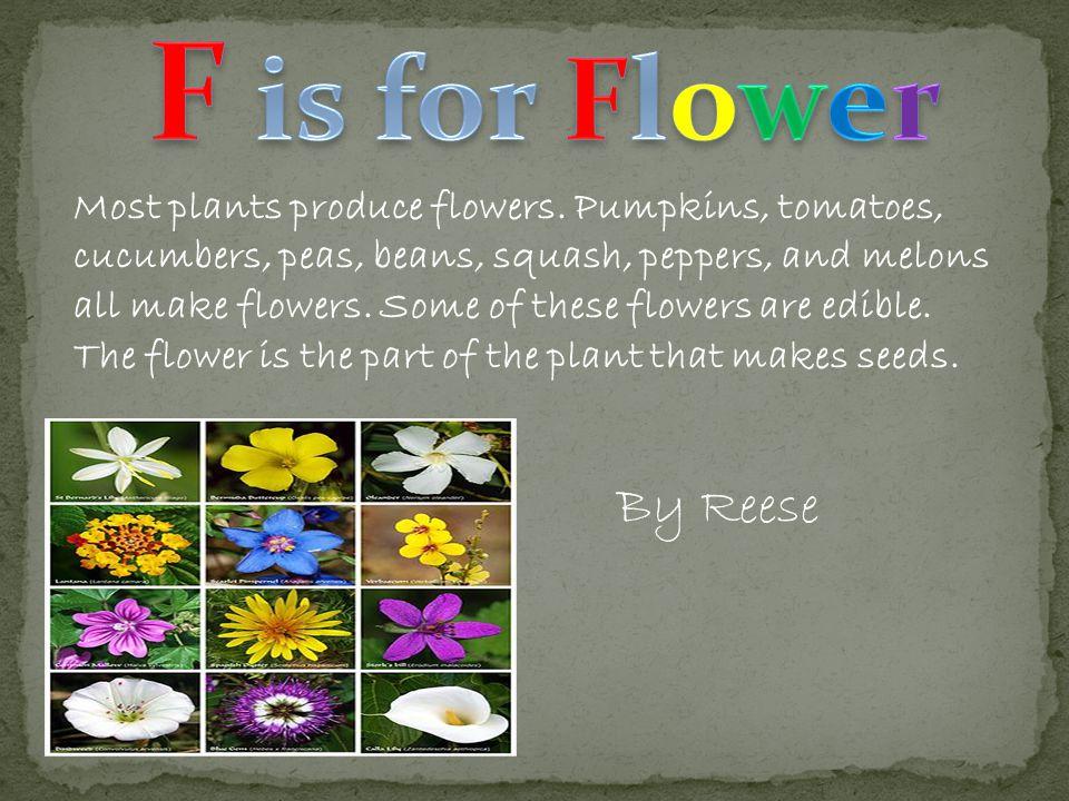 Most plants produce flowers.