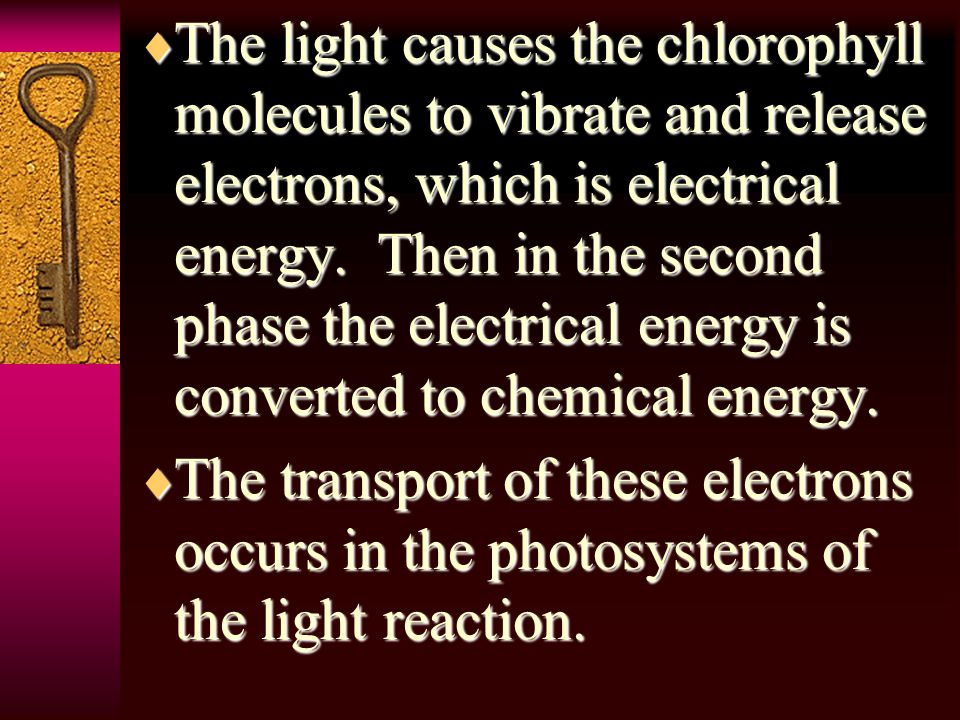 TTTThe light causes the chlorophyll molecules to vibrate and release electrons, which is electrical energy.