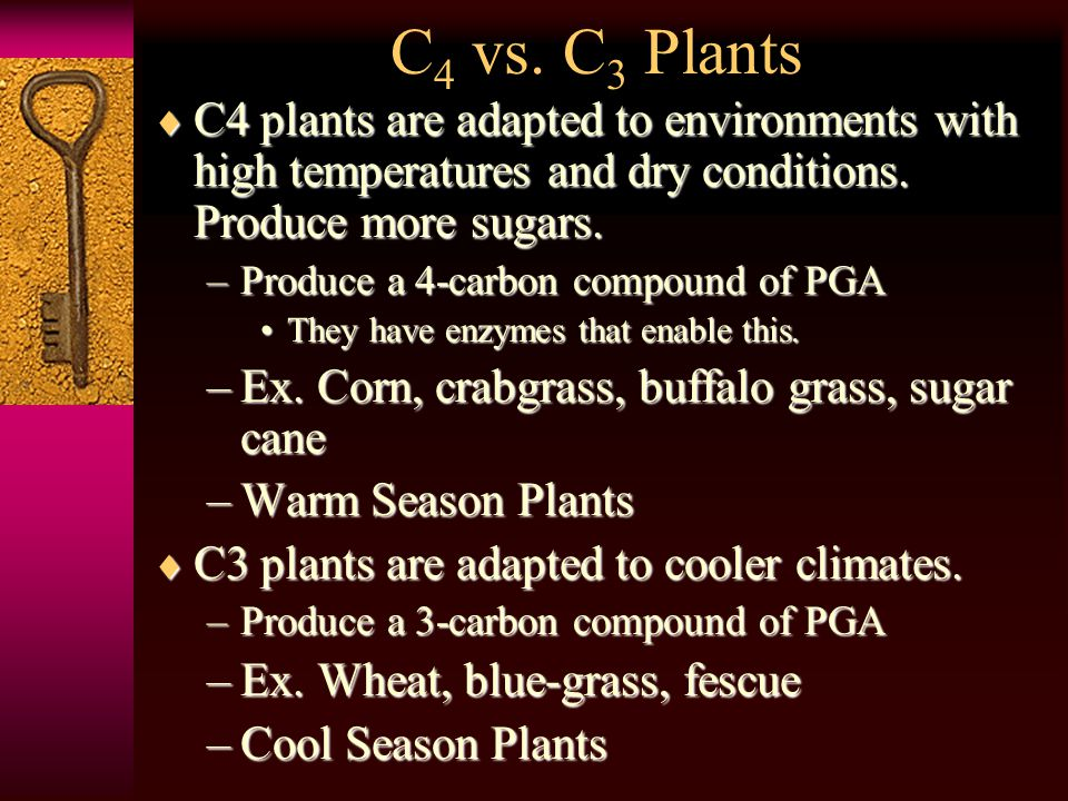 CCCCAM plants undergo a process where their stomata are open at night & closed during the day.
