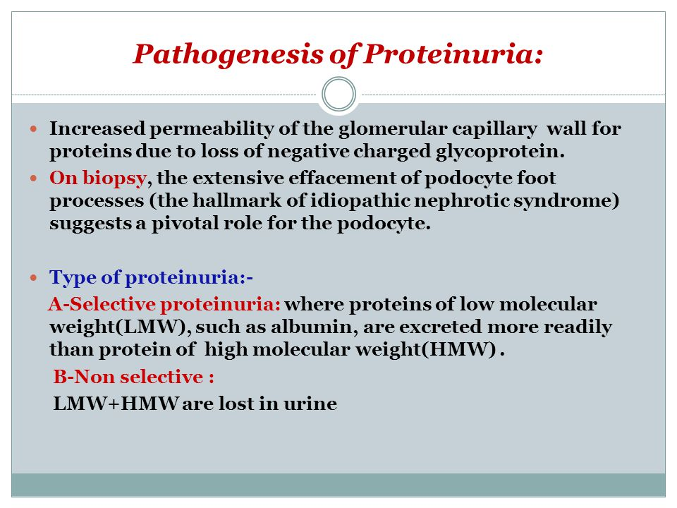 Pathogenesis of Proteinuria: Increased permeability of the glomerular capillary wall for proteins due to loss of negative charged glycoprotein. On bio