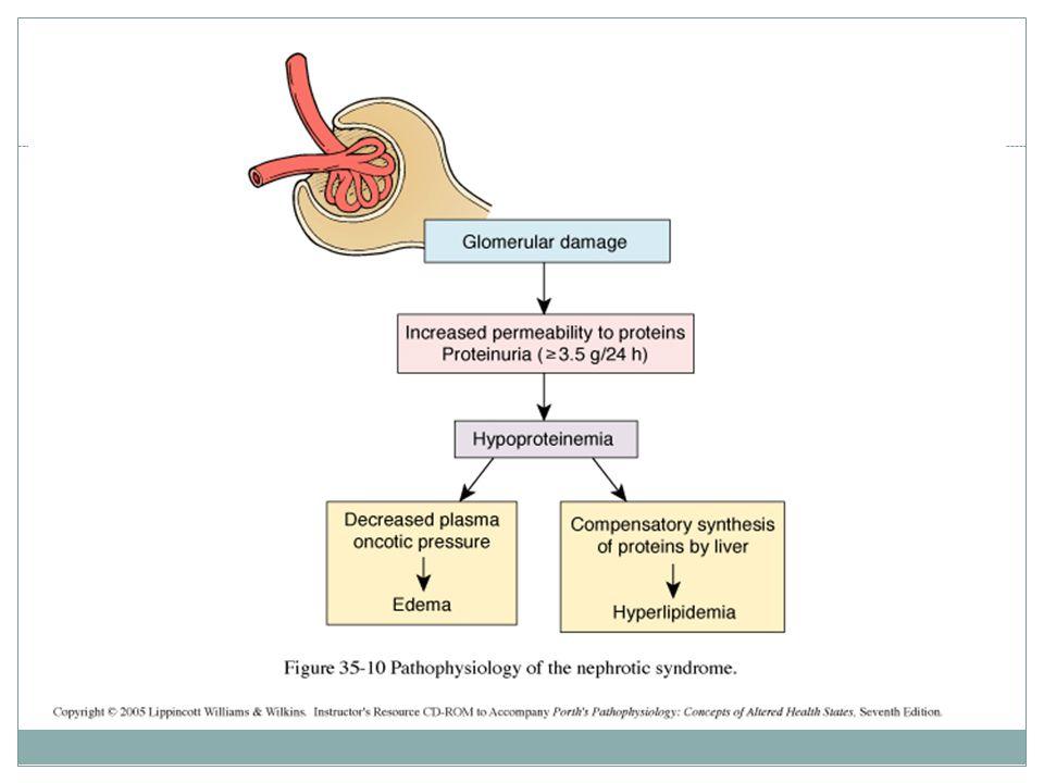 How many pathological types causes nephrotic syndrome?