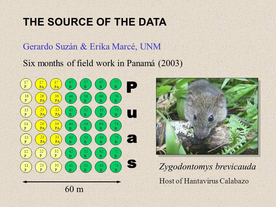 THE SOURCE OF THE DATA Gerardo Suzán & Erika Marcé, UNM Six months of field work in Panamá (2003) Zygodontomys brevicauda Host of Hantavirus Calabazo