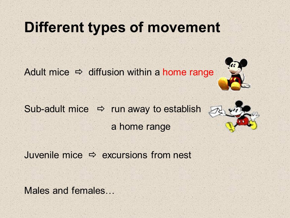 Different types of movement Adult mice  diffusion within a home range Sub-adult mice  run away to establish a home range Juvenile mice  excursions from nest Males and females…