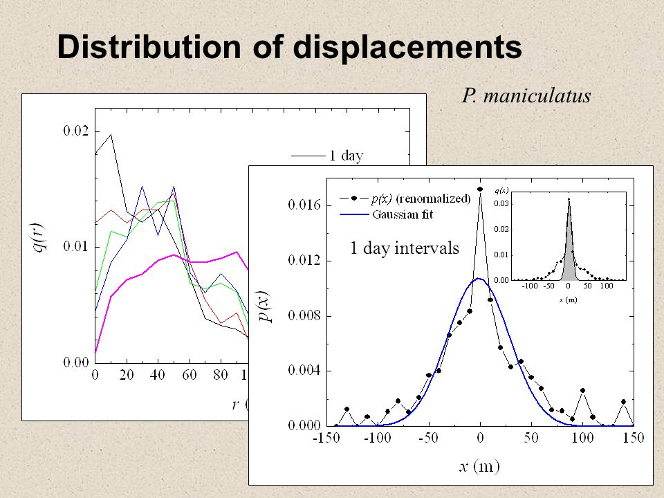 Distribution of displacements P. maniculatus 1 day intervals