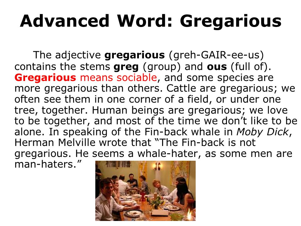 Advanced Word: Gregarious The adjective gregarious (greh-GAIR-ee-us) contains the stems greg (group) and ous (full of). Gregarious means sociable, and