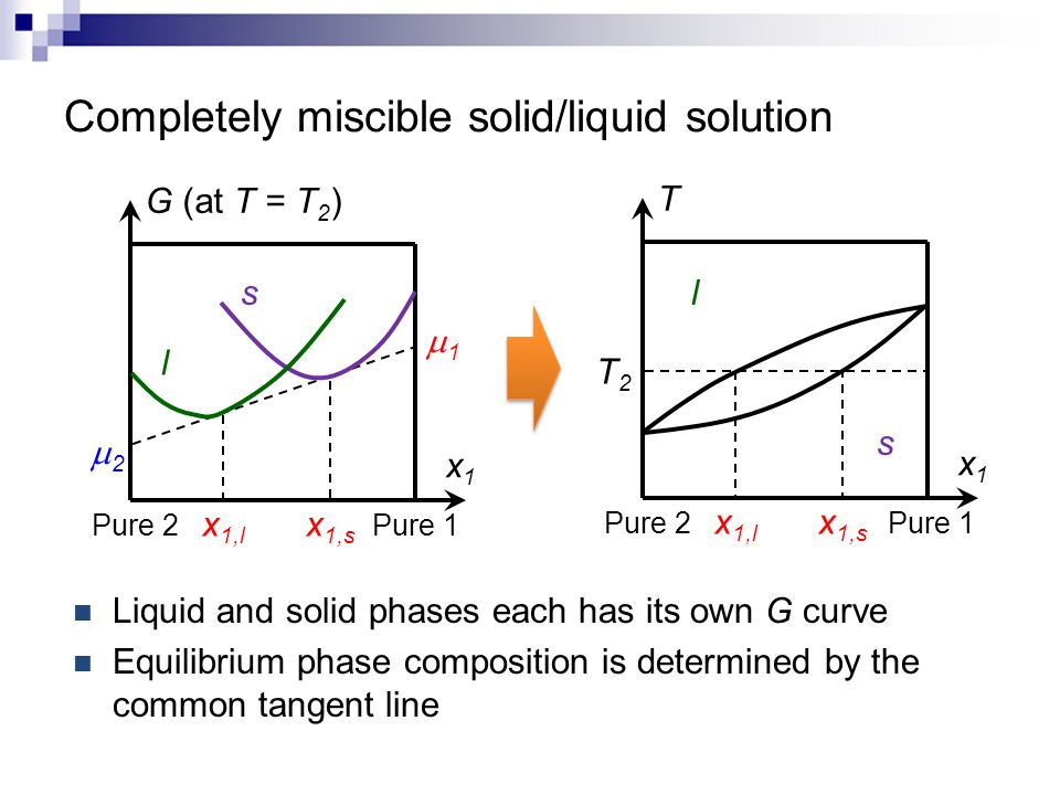Liquid and solid phases each has its own G curve Equilibrium phase composition is determined by the common tangent line x1x1 T x 1,l Pure 1 Pure 2 l s