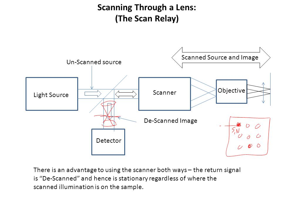 Scanning Through a Lens: (The Scan Relay) Light Source Scanner Objective Detector Un-Scanned source Scanned Source and Image De-Scanned Image There is