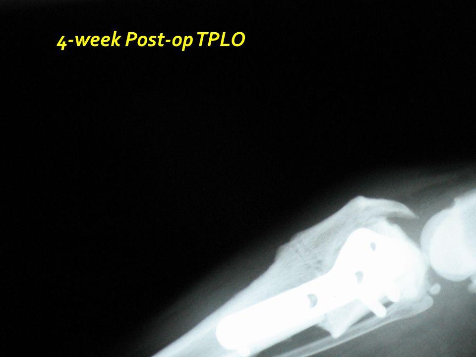 4-week Post-op TPLO