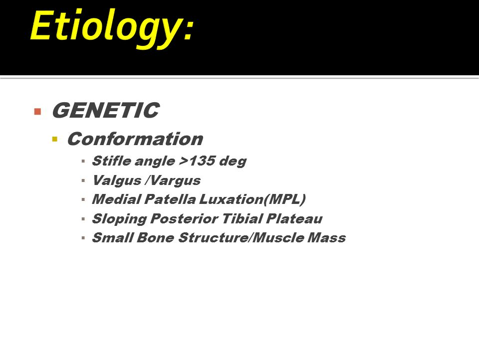  GENETIC  Conformation ▪ Stifle angle >135 deg ▪ Valgus /Vargus ▪ Medial Patella Luxation(MPL) ▪ Sloping Posterior Tibial Plateau ▪ Small Bone Structure/Muscle Mass