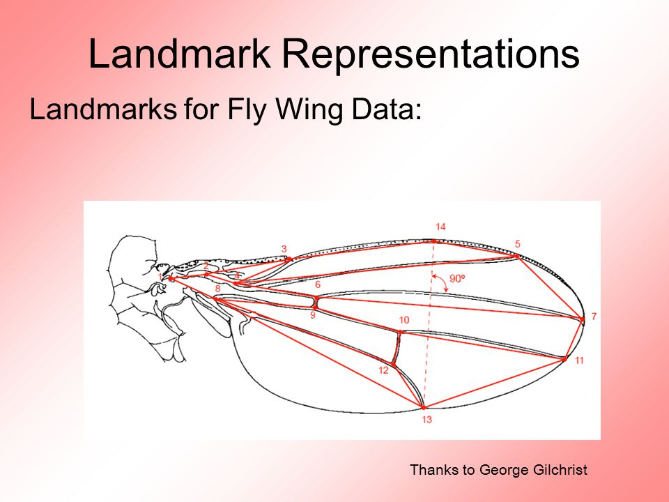 Landmark Representations Landmarks for Fly Wing Data: Thanks to George Gilchrist