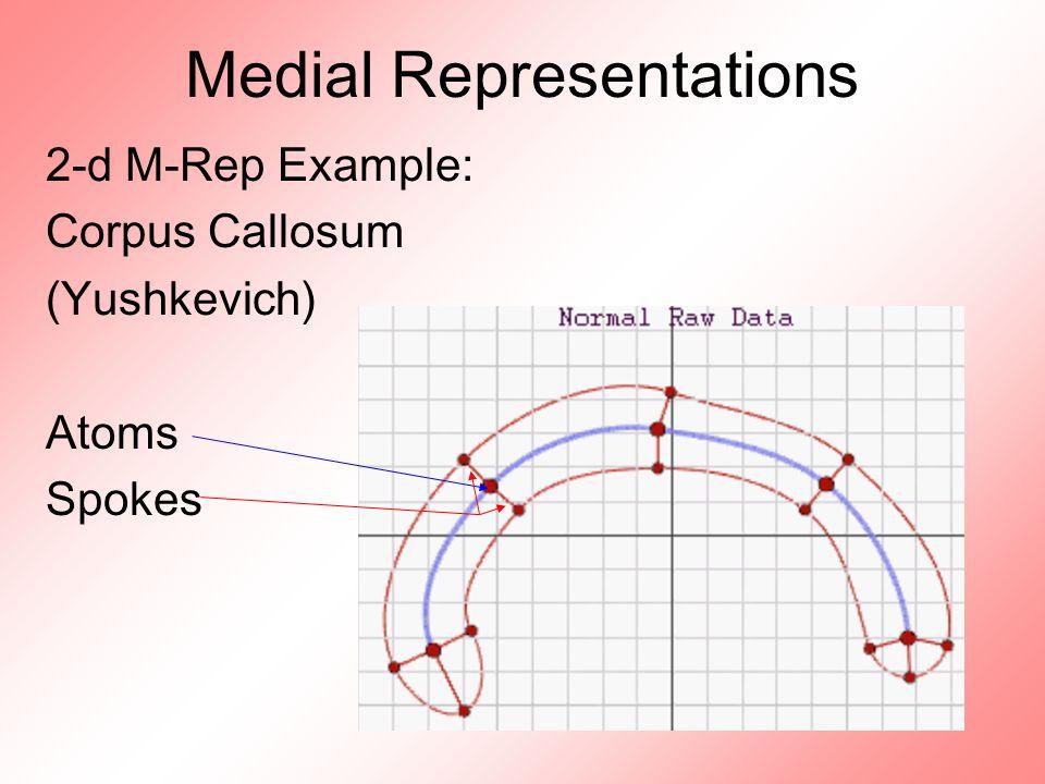 Medial Representations 2-d M-Rep Example: Corpus Callosum (Yushkevich) Atoms Spokes