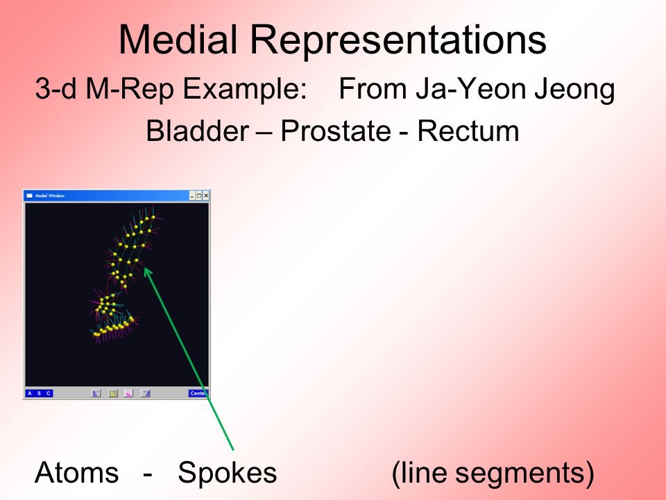 Medial Representations 3-d M-Rep Example: From Ja-Yeon Jeong Bladder – Prostate - Rectum Atoms - Spokes (line segments)
