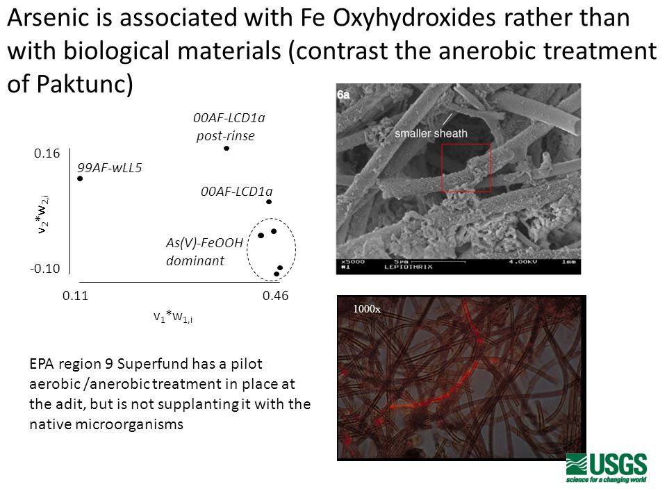 Arsenic is associated with Fe Oxyhydroxides rather than with biological materials (contrast the anerobic treatment of Paktunc) -0.10 0.16 0.11 0.46 99AF-wLL5 00AF-LCD1a post-rinse 00AF-LCD1a v 2 *w 2,i v 1 *w 1,i As(V)-FeOOH dominant 1000x EPA region 9 Superfund has a pilot aerobic /anerobic treatment in place at the adit, but is not supplanting it with the native microorganisms