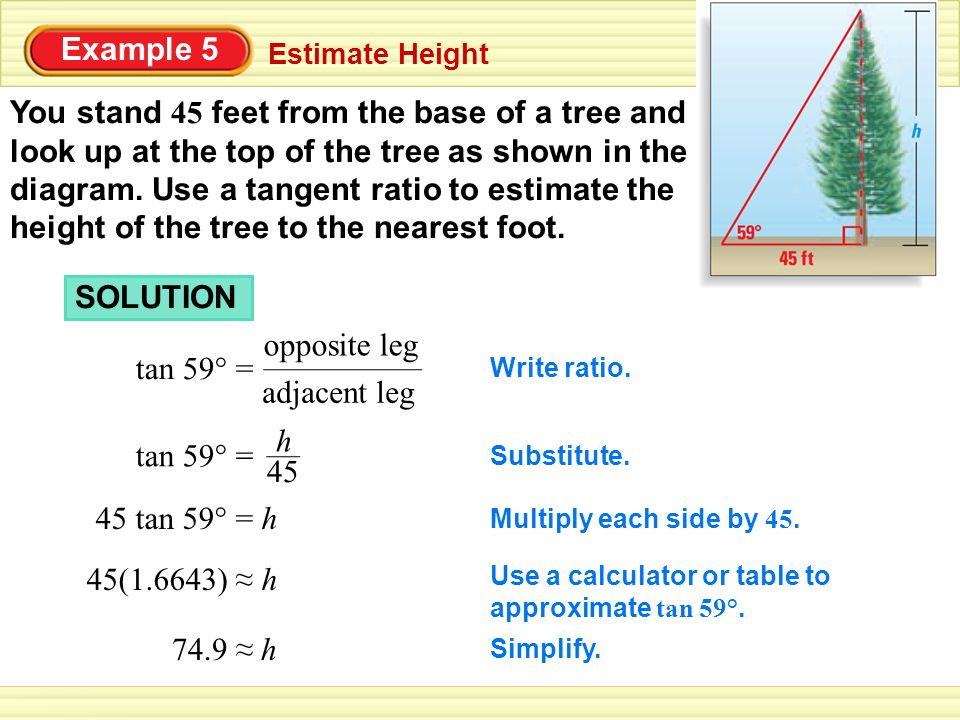 Example 5 Estimate Height You stand 45 feet from the base of a tree and look up at the top of the tree as shown in the diagram.