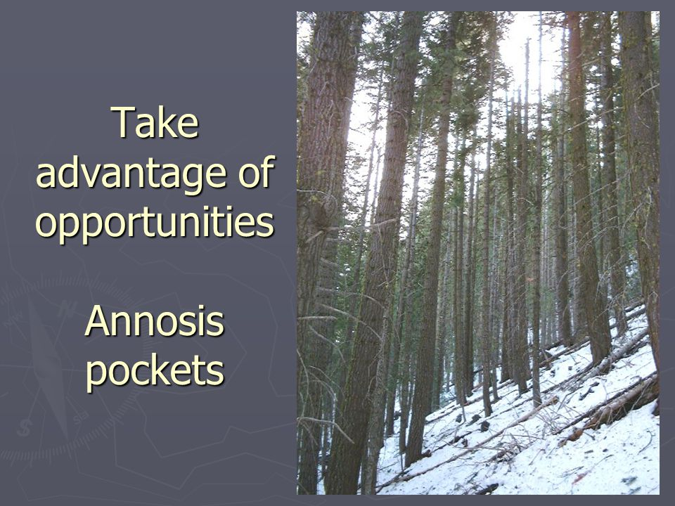 Take advantage of opportunities Annosis pockets