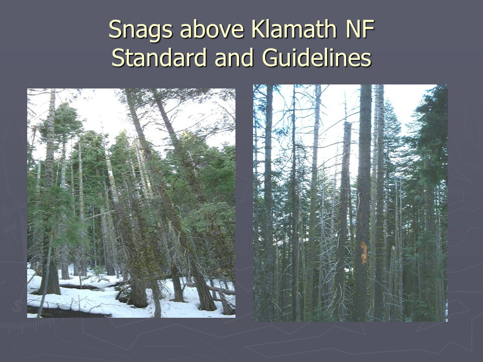Snags above Klamath NF Standard and Guidelines