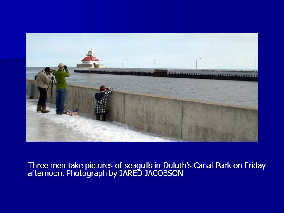 Three men take pictures of seagulls in Duluth s Canal Park on Friday afternoon.