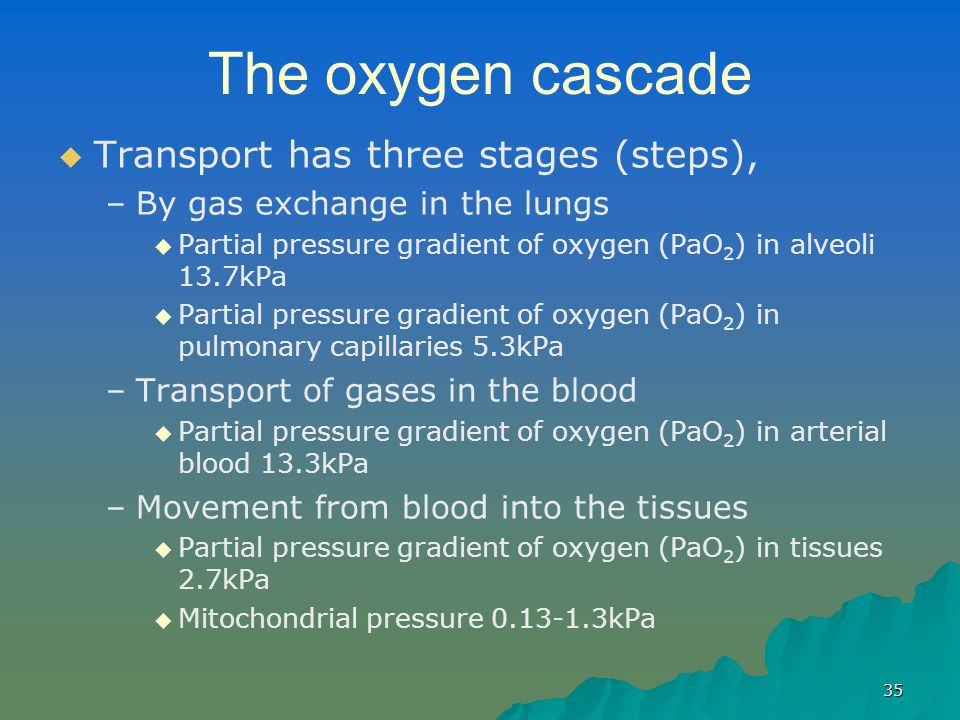 35 The oxygen cascade   Transport has three stages (steps), – –By gas exchange in the lungs   Partial pressure gradient of oxygen (PaO 2 ) in alve