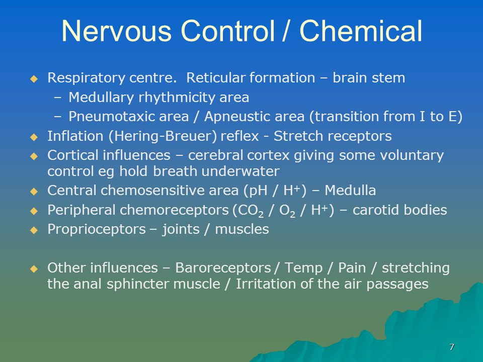 7 Nervous Control / Chemical   Respiratory centre. Reticular formation – brain stem – –Medullary rhythmicity area – –Pneumotaxic area / Apneustic ar