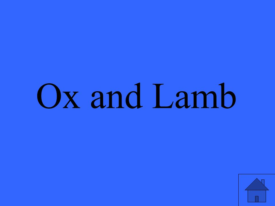 Ox and Lamb