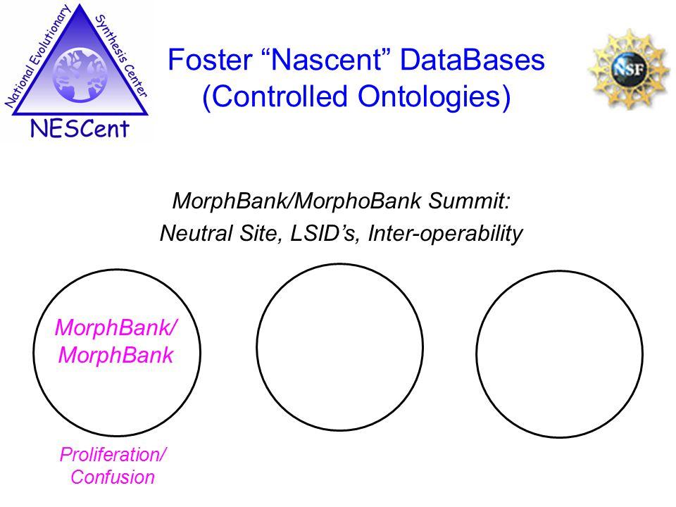 MorphBank/MorphoBank Summit: Neutral Site, LSID's, Inter-operability Foster Nascent DataBases (Controlled Ontologies) MorphBank/ MorphBank Proliferation/ Confusion