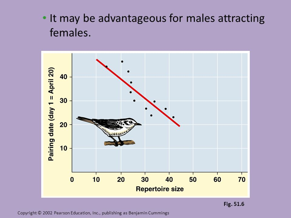 It may be advantageous for males attracting females. Copyright © 2002 Pearson Education, Inc., publishing as Benjamin Cummings Fig. 51.6