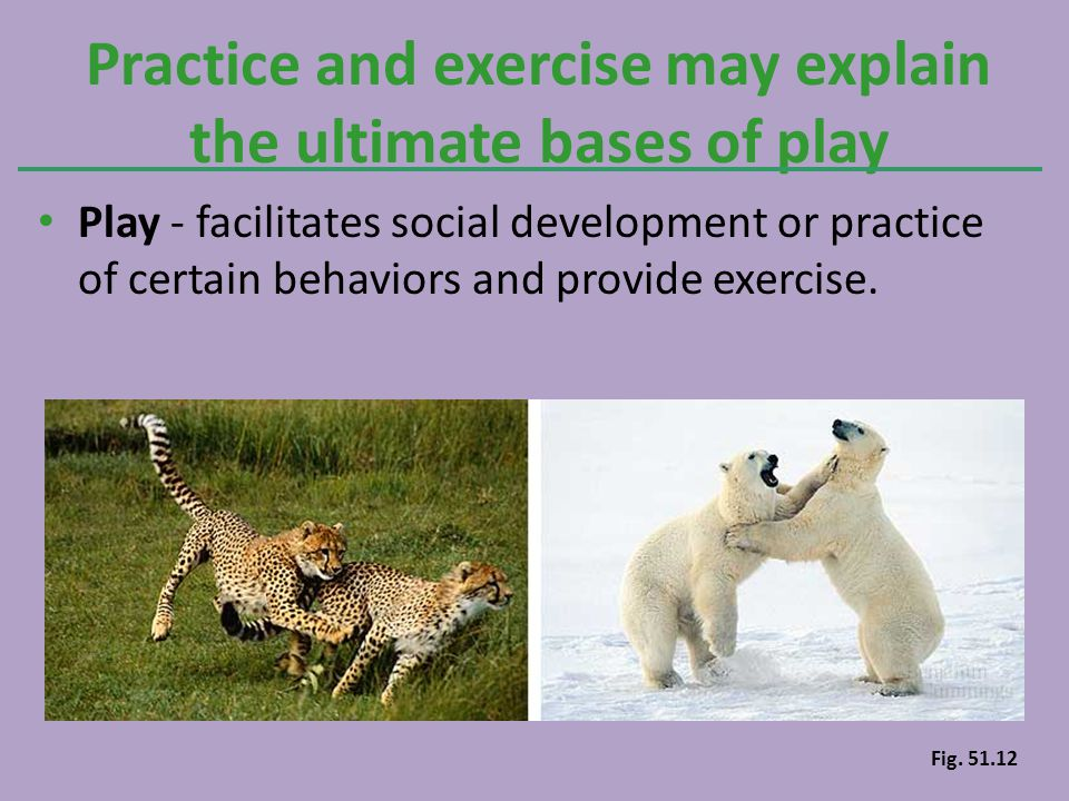 Play - facilitates social development or practice of certain behaviors and provide exercise. Practice and exercise may explain the ultimate bases of p