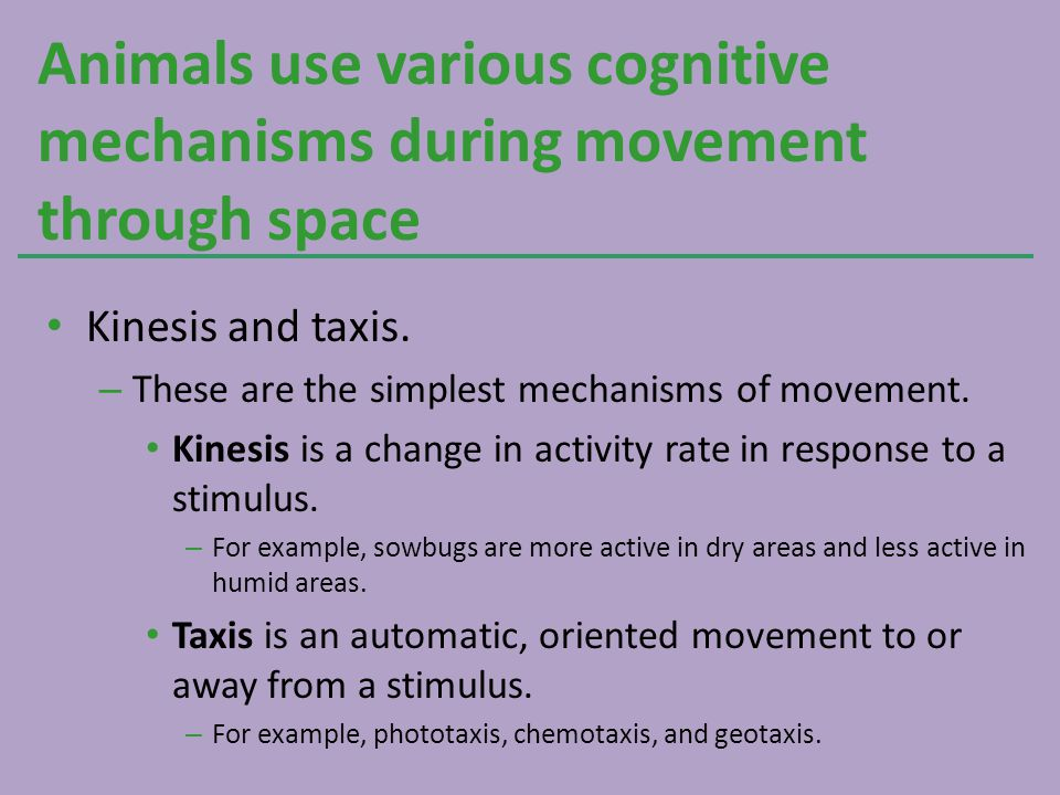 Kinesis and taxis. – These are the simplest mechanisms of movement. Kinesis is a change in activity rate in response to a stimulus. – For example, sow
